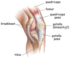 Total knee prothese